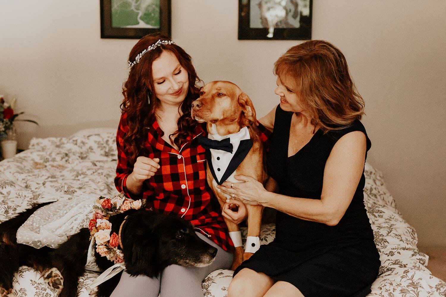 Bride and her mother dressing up their lovely dogs for the wedding ceremony at home