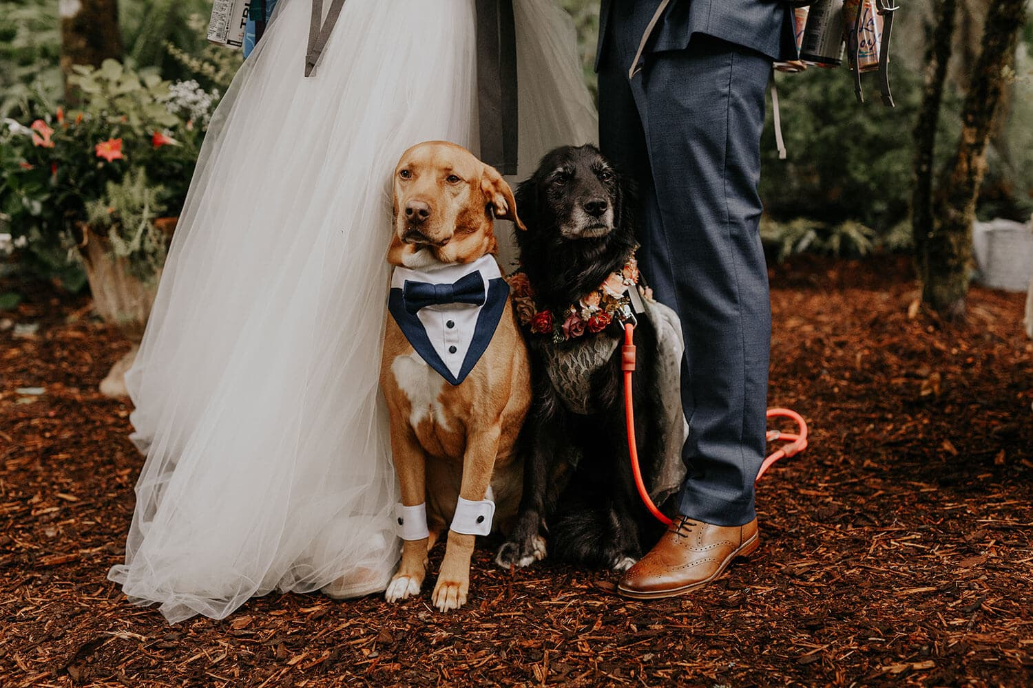 Cute dogs wearing wedding outfits and standing by the bride and groom in a forest
